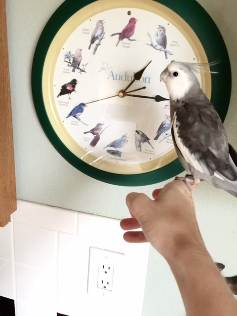 """Speaking of which, my large featherless assistant will be your official """"home tour"""" guide."""