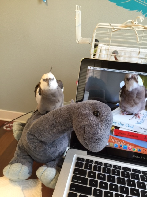 """Hey, Mom - look who stopped by! His name is """"Bronte"""" - short for """"brontosaurus."""""""