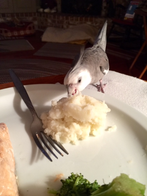 "This technique is called the ""open beak and pounce."" Here, you are already eating your dinner before your prey even realizes it is on the menu!"