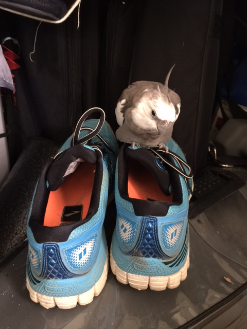 """Sneakers,"" you say? To help my large featherless assistant walk around?"