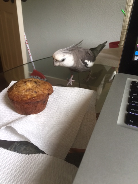As the white and grey form moves closer, it appears to hone in on the muffin.