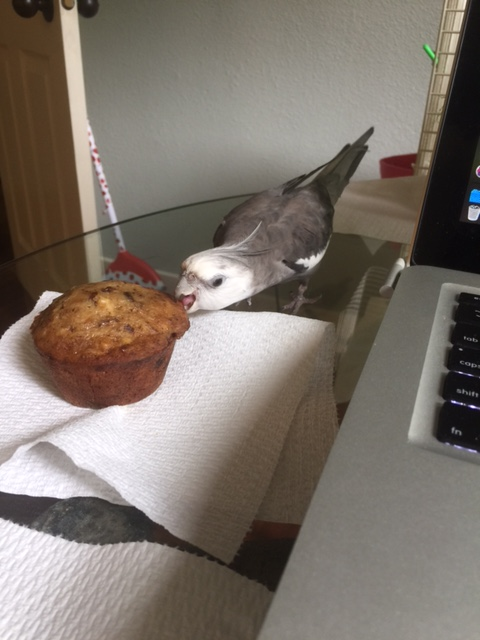 The Muffin Eater snatches nearly-invisible fragments of muffin with each quick bite he takes.