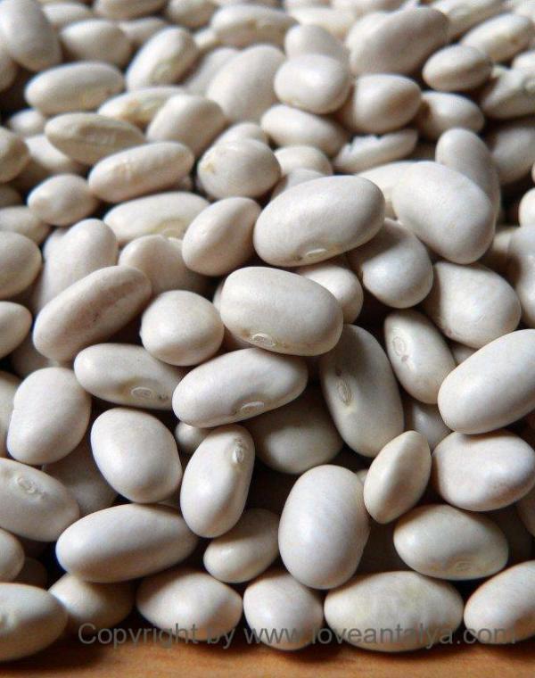 Hvide bønner/ white beans