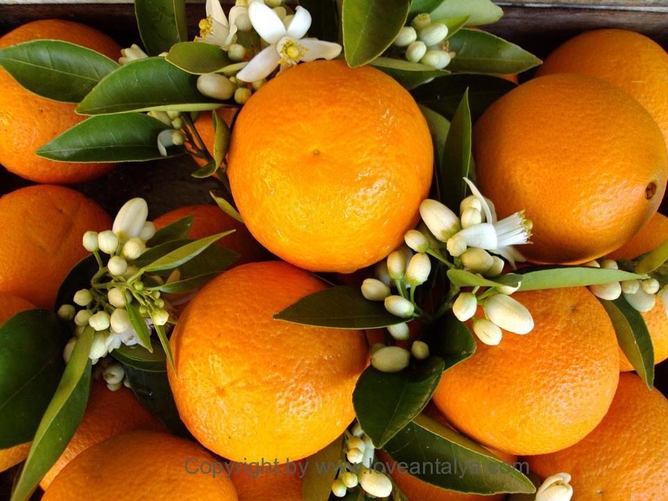 appelsin-antalya