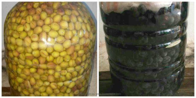 Syltede oliven
