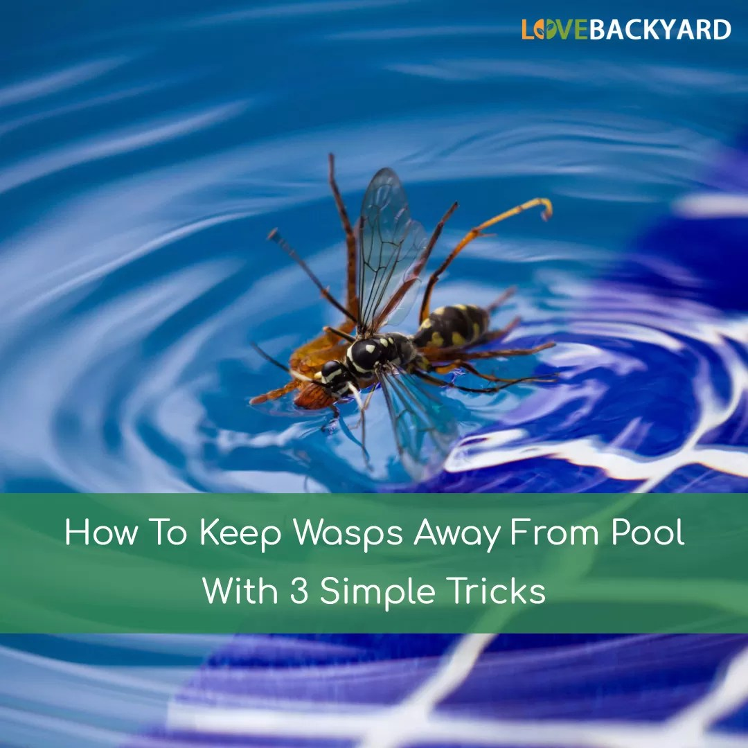 How To Keep Wasps Away From Pool With 3 Simple Tricks Apr