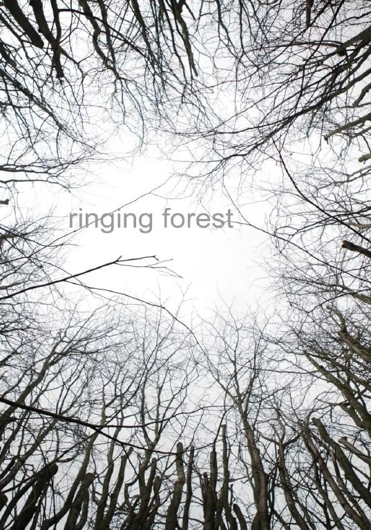 Ringing Forest