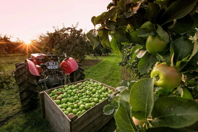 Armagh's Food and Cider Festival