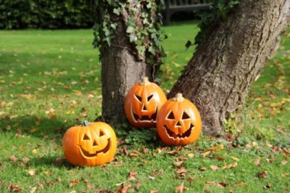 Celebrating Halloween with pumpkins at Claydon, Buckinghamshire.
