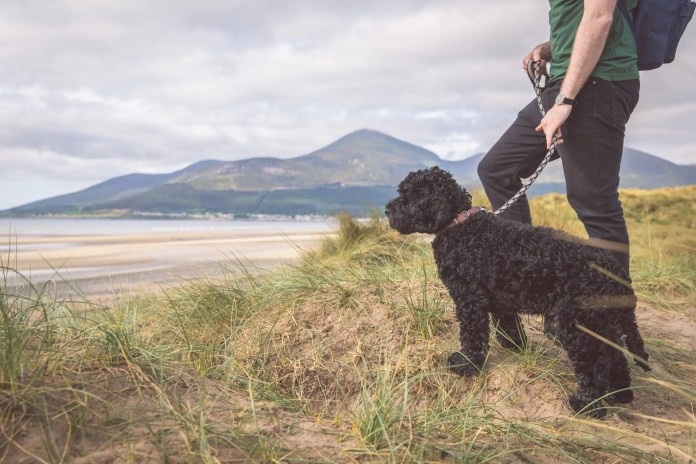Walking in Murlough National Nature Reserve, County Down