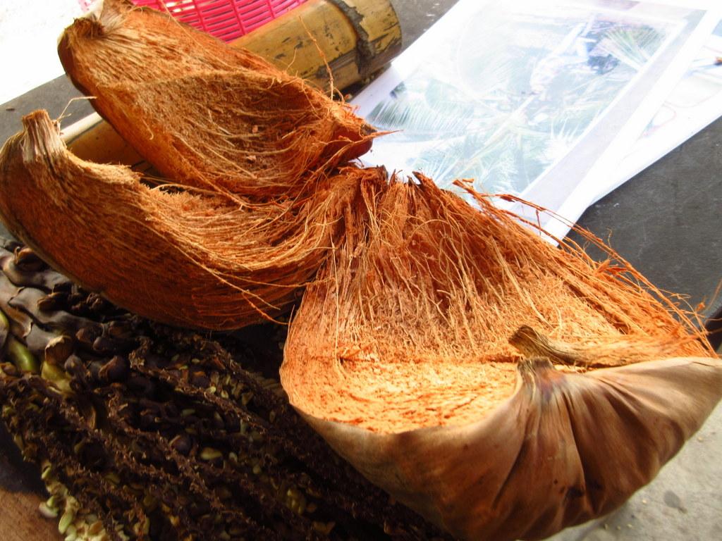 ココナッツ やしの木 殻