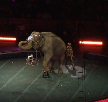 performing elephant carrying around a dog