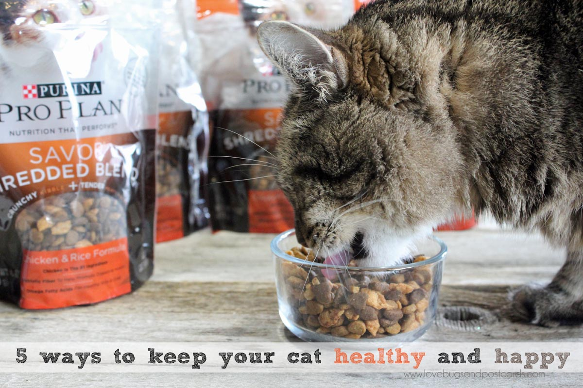 5 ways to keep your cat healthy and happy