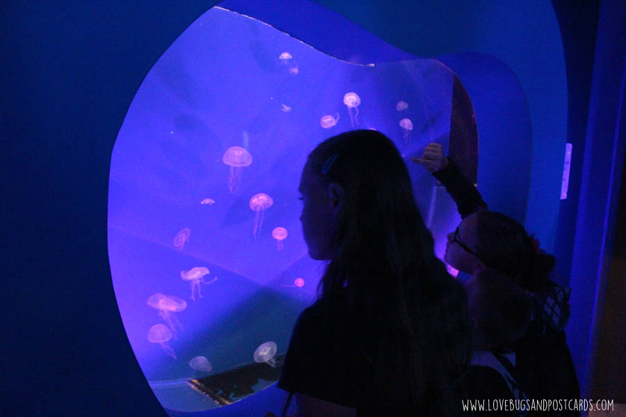 aquariumjellyfish