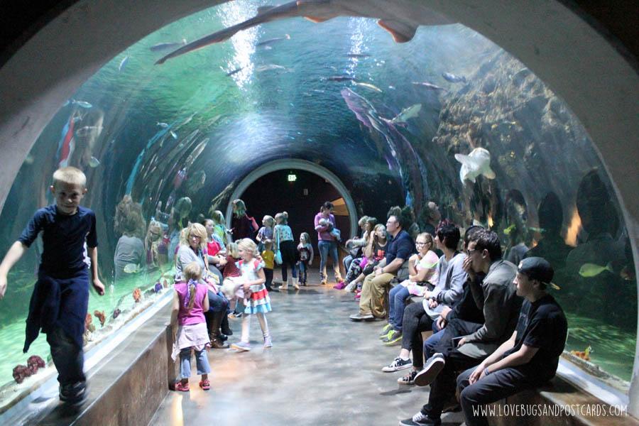 aquariumoceansharktank