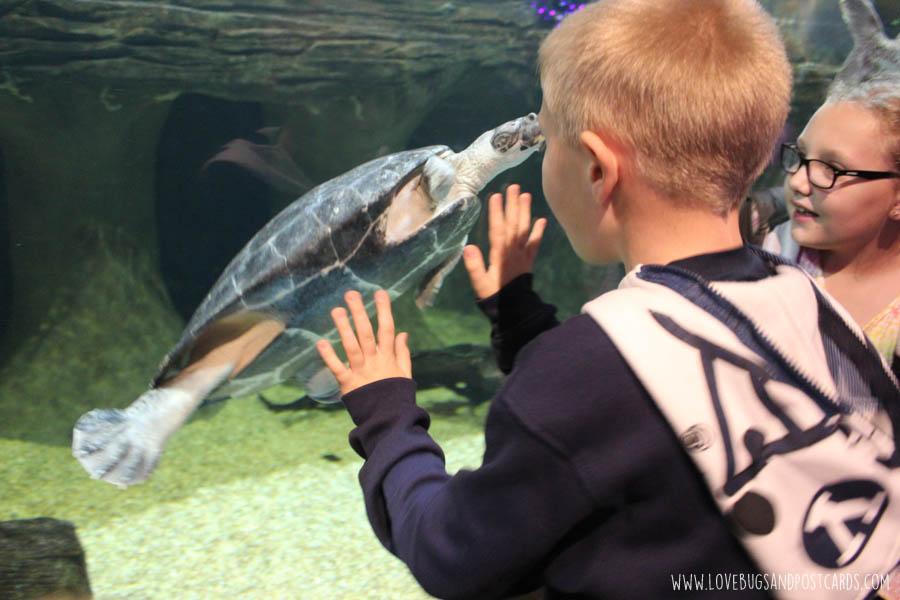 aquariumsouthamericaturtle