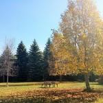 Осенние будни