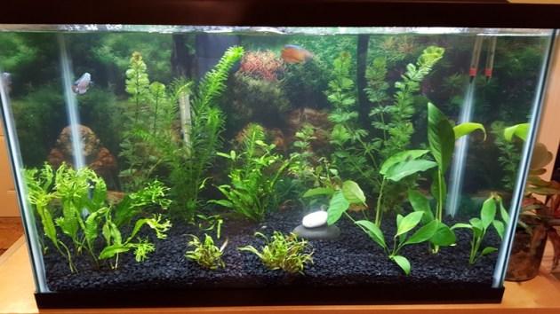 fish tank (4)