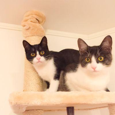 キャットタワーの仔猫達