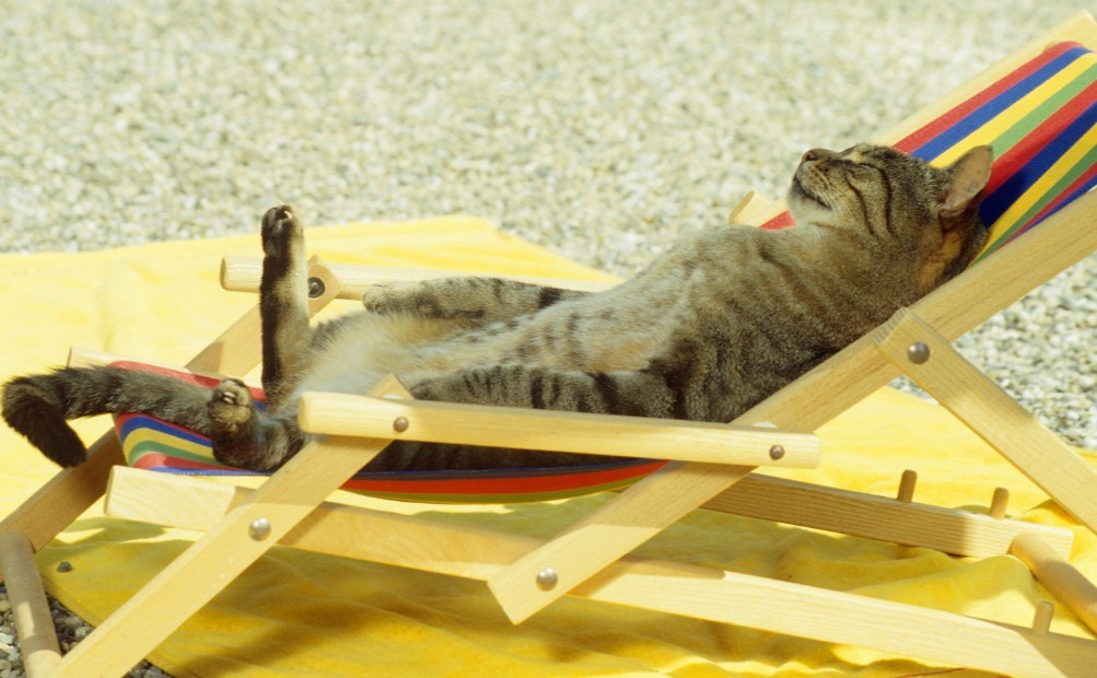 Cats During Summer Vacations Lovecats World