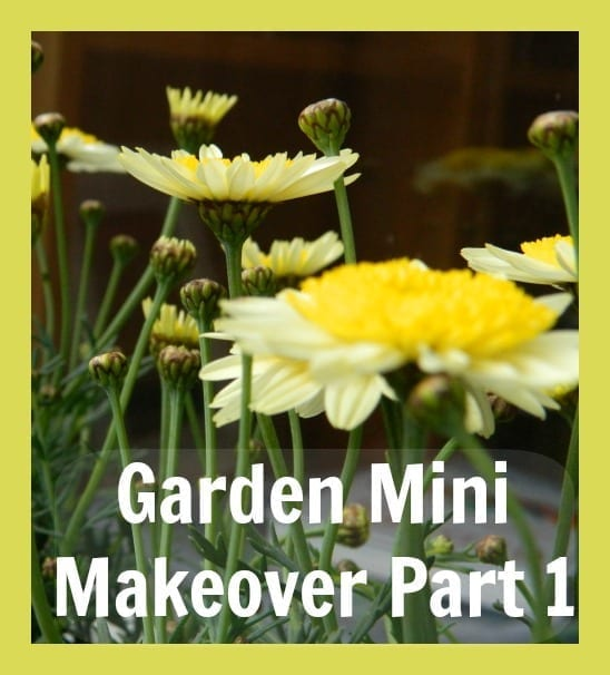 garden mini makeover