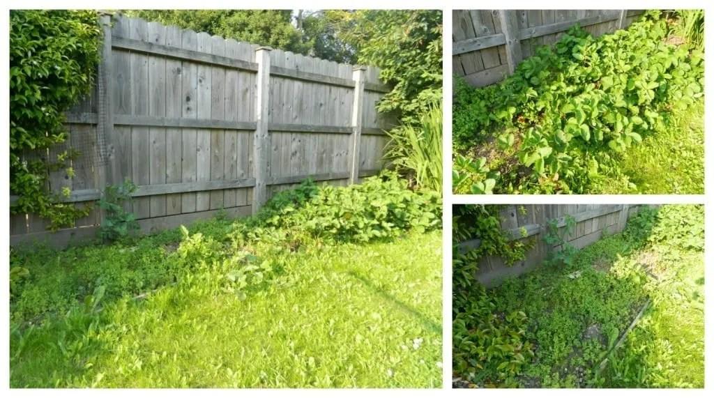 homebase garden makeover