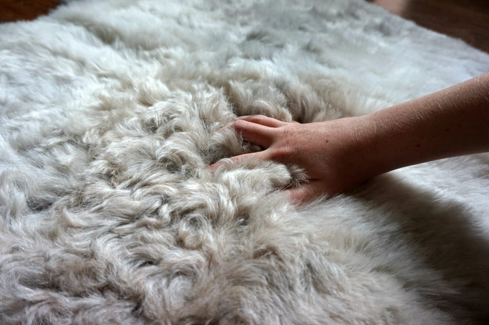 Icelandic sheepskin from Sheep Shop