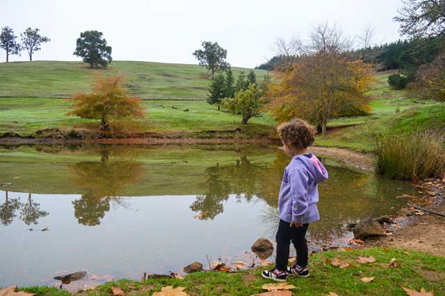 Em overlooking a lake in the World are of the Golden Valley Tree Farm
