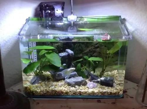 Led Light Planted Aquarium