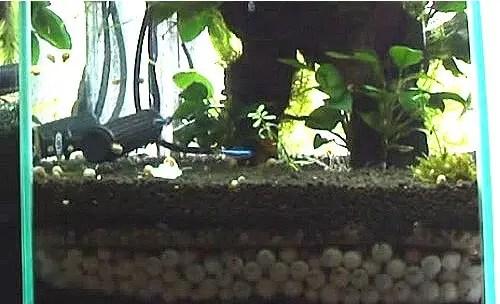 Image result for gravel filter fish