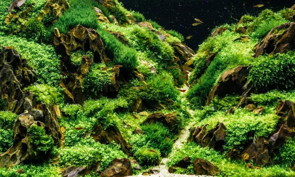 unique fish tank backgrounds