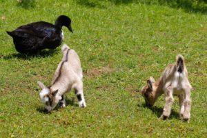petting-zoo-1411440_960_720