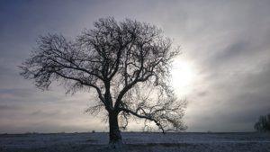 tree-989781_960_720