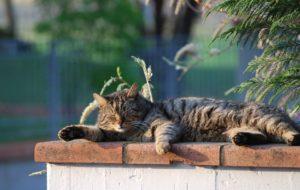 cat-720366_960_720