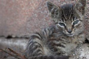 baby-cat-1700464_960_720