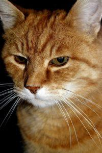 cat-1286680_960_720