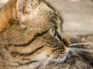 cat-181608_960_720