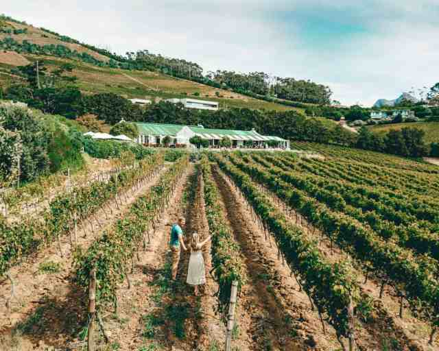 Cape Town wineries, one of the top things to do in Cape Town