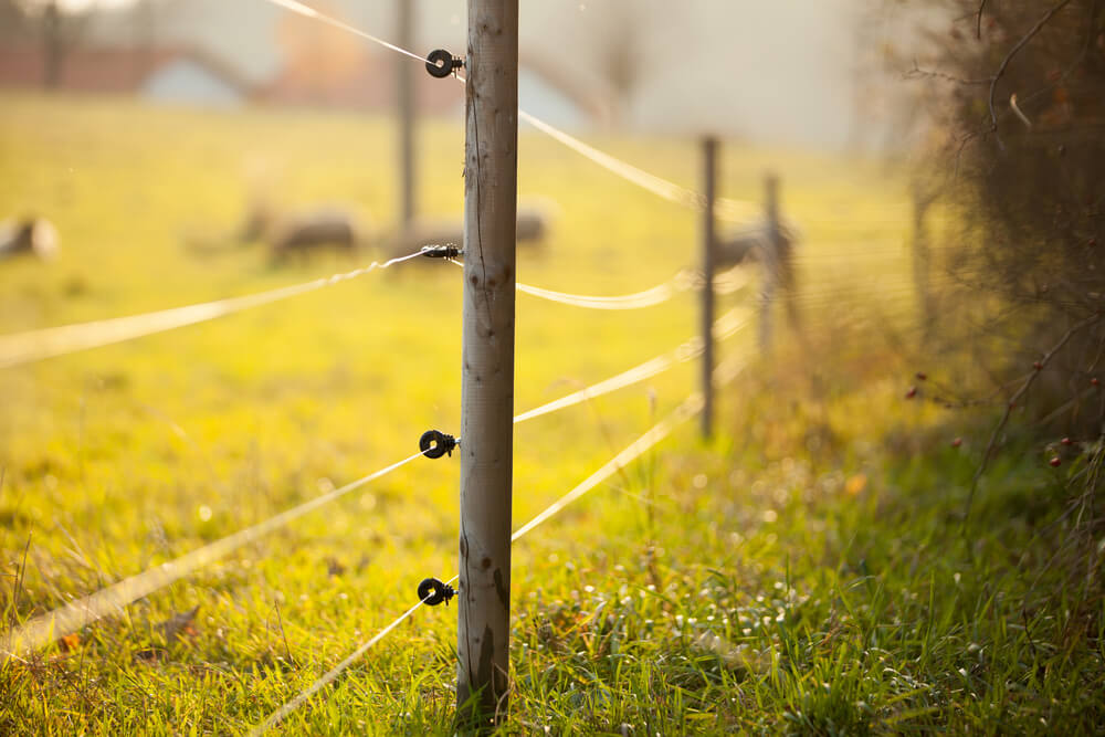 In Ground Dog Fence Wire Layout On Electric Fence Wire Diagram