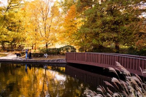 fall-proposal-brent-gumminger-photography