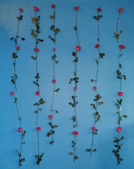 2 dozens of roses