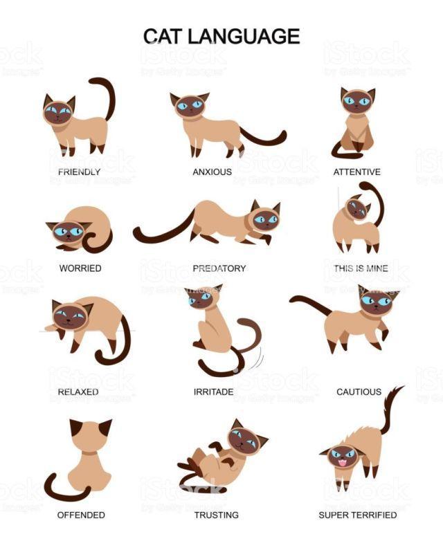 Coada pisicilor
