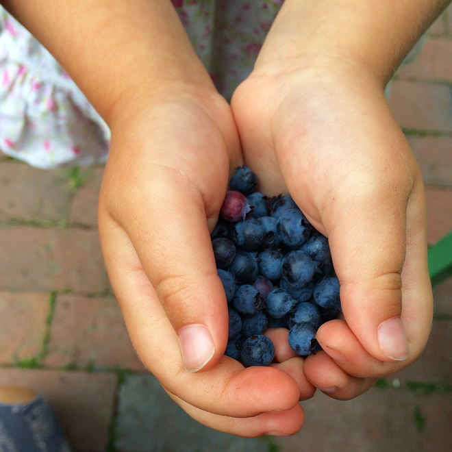 blueberry-hands-melu_660x660