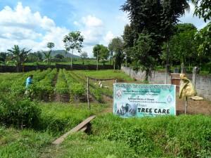 Tree farm (4)