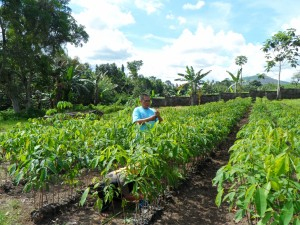 Tree farm (5)