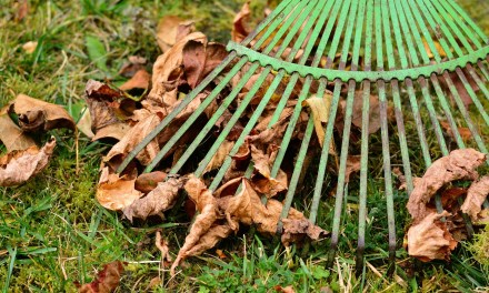 Loveland announces fall leaf and brush collection