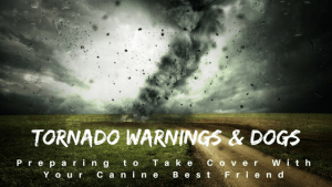 Tornado Warnings and Dogs Preparing to Take Cover With Your Canine Best Friend