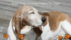 Seven Days of Giving Thanks for Dogs