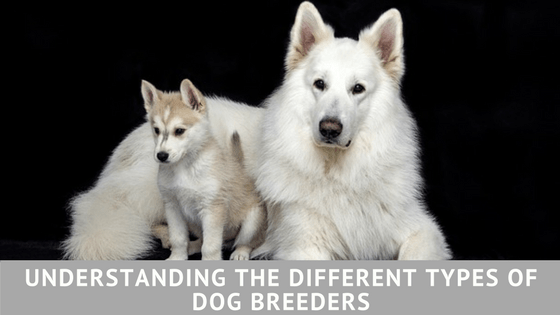 Understanding the Different Types of Dog Breeders