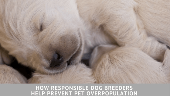 How Responsible Dog Breeders Help Prevent Pet Overpopulation